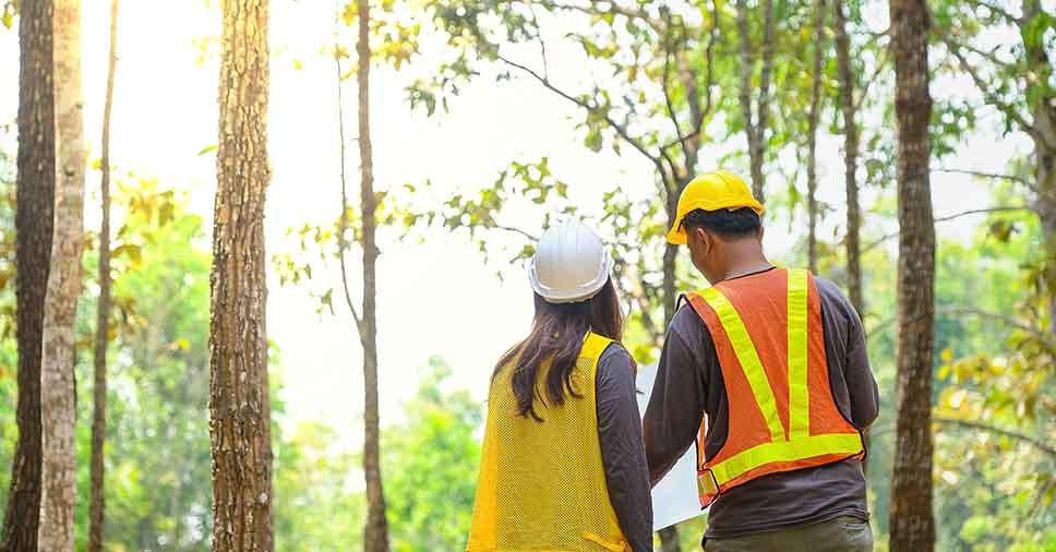 Serviço de consultoria ambiental: conheça a área de atuação